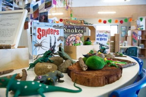 stories and lizards